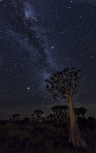 Namibia Milky Way and quiver trees at night