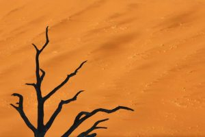 Namibia, Dead Vlei Tree branches and sand dune