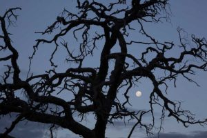 Africa, Namibia Tree silhouette and full moon